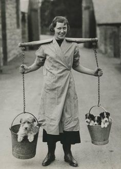 Fox terriers in a milkmaid's pails Fox Terriers, Chien Fox Terrier, Wirehaired Fox Terrier, Wire Fox Terrier, Sealyham Terrier, Vintage Pictures, Old Pictures, Tier Fotos, Old Dogs