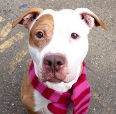 ARTHUR - A1101143 - - Manhattan  TO BE DESTROYED 01/14/17  A volunteer writes: Arthur might have been quite nervous upon arrival at the care center, but he has made a lovely turn around after just a few days. Playgroups with his peers and strolls in the street are helping, of course. He is a handsome gent with an earnest face, is a bit on the thin side and has a sore at the base of his tail, but I never saw him being bothered by it. Arthur is welcoming in his kennel that is