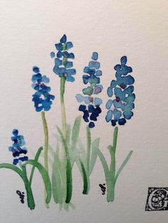 Grape Hyacinths Watercolor Card I Grape hyacinths are understated in most gardens. Their color cannot be matched. I have used watercolor on this