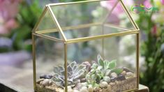 geometric  terrariums Terrarium Ideas, Glass Terrarium, Terrariums, Small Potted Plants, Air Plants, Plant Holders, Flower Pots, Succulents, Planters