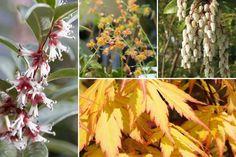 10 plantes vivaces d'ombre pour composer un massif - Promesse de Fleurs Geranium Vivace, Plantation, Plants, Menu, Garden, Shade Garden Plants, Perennials, Beautiful Gardens, Garden Landscaping