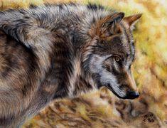 European Wolf by ManiaAdun on deviantART - Pastel Pencils