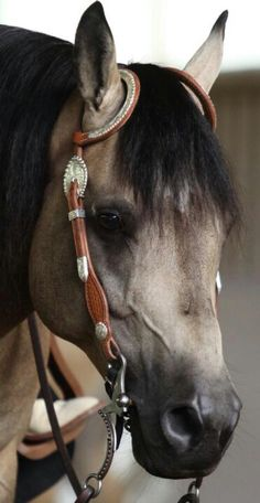 I always wanted a buckskin after seeing Dances With Wolves>>> Lil Peppy Dunit Right, AQHA Stallion, sire of Lil Buck Dunit Quarter Horses, American Quarter Horse, Most Beautiful Animals, Beautiful Horses, Beautiful Creatures, Horses And Dogs, Show Horses, Majestic Horse, Horse World