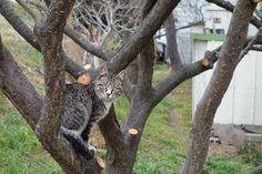 猫|ネコ|ねこの日々 | じぇいなすと、うちニャンズ+外猫いっぱい | ページ 4