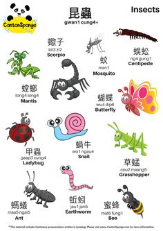 CantonSponge brings Cantonese Language Learning to life via fun activities and resources, including (but not limited to) flashcards, posters and song sheets. Basic Chinese, How To Speak Chinese, Chinese Words, Chinese English, Learn Chinese, Chinese Fruit, Mandarin Lessons, Learn Mandarin, Learn Cantonese