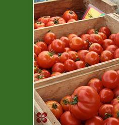 tomates-union-square-organic-market-(leticia-massula-para-cozinha-da-matilde)