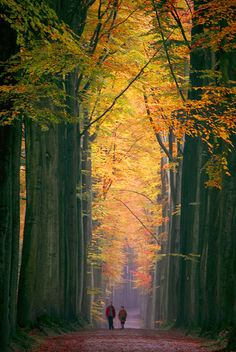 """""""A Walk in the Cathedral of Light,"""" ~ fall in the Sonian Forest outside of Brussels, Belgium.  Photo: Vainsang, via Flickr"""