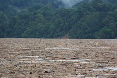 HSBC bank funding large-scale rainforest destruction and invasion of indigenous lands in Borneo, alleges report