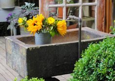 WSHG.NET | A Garden for Refuge — and Time with Friends | Featured, The Garden…