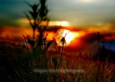 burning summer by Dragisa Krstic on 500px