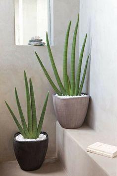 Die 22 besten Bilder von Pflanzen im Badezimmer in 2015 | Badezimmer ...