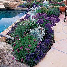 Border of purple African Daisies, Lobelia, Sea Lavender, and silvery Dusty Miller hugs a pool in Scottsdale, AZ.