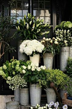 Flower Gardening Design Florist Style in Garden Design - Florist Style. An assemblage of flowers or plants arrayed as if outside a florist shop, a charming florist shop, but in your garden. New client yesterday, and she' My Flower, Fresh Flowers, White Flowers, Beautiful Flowers, Beautiful Images, Summer Flowers, Cactus Flower, Exotic Flowers, Yellow Roses