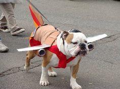 Look, up in the sky, it's a bird, it's a....bulldog plane!!!