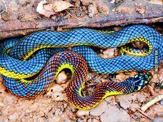 Hermosa culebra de colores