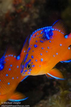 There is a really strong contrast between the complimentary colours orange and blue. The fact that both of these colours are almost a neon light shade of each makes them stand out even more against each other. There is also contrast between the blackish background and the bright fish. The fact that both shades are bright also suggests a sort of unity.