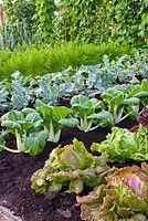 City Beautiful Landscaping can help you set this up! Potager Garden, Veg Garden, Vegetable Garden Design, Fruit Garden, Edible Garden, Garden Plants, Planting Vegetables, Growing Vegetables, Mixed Vegetables