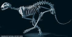 running cheetah bones | Close to the bone: The amazing pictures which reveal how evolution has ...