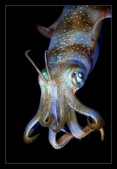Underwater macro by Andrey Narchuk.  So beautiful.