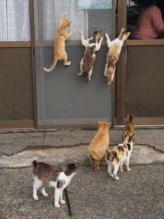 darylfranz:   ごはんの準備中網戸に張り付きまくる猫たちwwwwwww -...