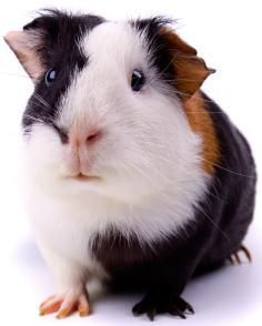 Are we guinea pigs?