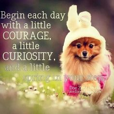 Begin each day with a little courage, a little curiosity, and a little spring in your step. ~Doe Zantamata Spring and Easter Puppy Quotes, Funny Animal Quotes, Funny Animals, Funny Sayings, Toy Pomeranian Puppies, Pomeranians, Puppies For Sale, Cute Puppies, Spring Quotes