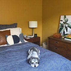 TANLINES, deep yellow paint color by Backdrop. Yellow Paint Colors, Yellow Painting, Best Bedroom Paint Colors, Canvas Drop Cloths, Paint Samples, Data Sheets, Interior Walls, Exterior Paint, Backdrops