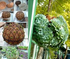 How to Make a Hanging Succulent Sphere - http://www.amazinginteriordesign.com/make-succulent-sphere-garden/