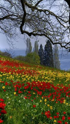 Flowery field by the water (no location given) by vadaka1986