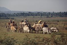 Teams of stolid oxen keep an unhurried pace deep in the southeastern interior as campesinos haul cotton to market. The carts, called carretas, are equipped with oversize wheels for deeply rutted tracks and flooded areas. In a land with few paved roads, vast areas still lie untouched by Paraguay's rising fortunes. The National Geographic Magazine (1943)