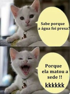 Gato do Face Gato Do Face, Funny Cats, Funny Jokes, Stress, Try Not To Laugh, Laugh Out Loud, Puns, I Laughed, My Photos
