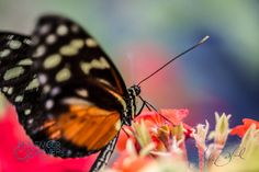 #Butterfly #boisezoo taken by Luke Ballard on Photographing America tour next…