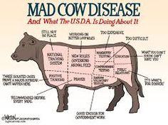 MAD COW DESEASE HITS BRITAIN
