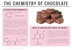 The chemistry of chocolate.