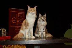 Mezinárodní výstava koček Plzeň 25.7.2015 - 26.7.2015