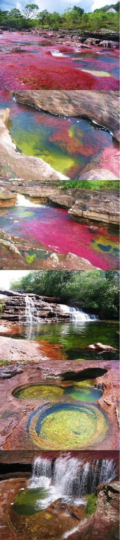 Seven colors river in Colombia, beautiful.