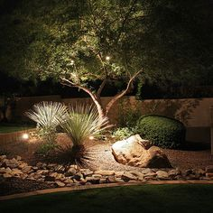 Olive tree with under planting