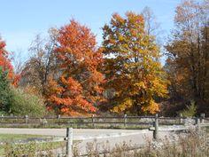 Michigan in the fall.