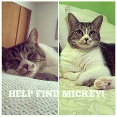 Please help me find my kitty. Im desperate and heartbroken. :'(