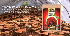 Bulk organic mushroom extract powders from 100% mushrooms. No fillers. No grain. No mycelium. Just pure mushrooms. Reishi, Cordyceps, Chaga, Turkey Tail.