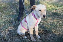 MARVIN, Hund, Mischlingshund in Ungarn