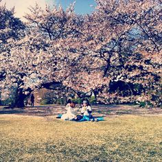 Tokyo dolce vita  #cherry #blossom #sakura #hanami #tokyo #shinjuku #gyoen #Japan