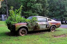Wow! 1967 Shelby GT500 Left for Dead? - Hot Rod Network