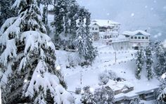Shimla Hill Station is one of the most visited Hill Stations in Himachal Pradesh. Explore various travel & tourism related information about Shimla Hill Station Himachal Pradesh. Best Honeymoon Destinations, Honeymoon Places, Honeymoon Packages, Holiday Destinations, Travel Destinations, Travel Tourism, Vacation Packages, Vacation Places, Travel Agency