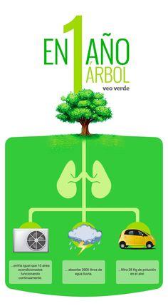 Beneficia en el primer año de vida de un #árbol