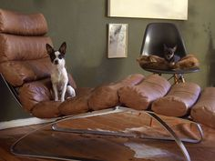 Milo on a Cor Sinus lounge chair, and Mia on an Eames shell chair.