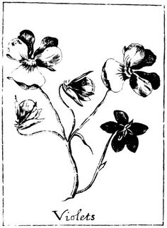 Botanical – Black and white – Line Drawing – Violets | Vintage ...