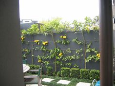 Espaliered lemons and limes. Shop for produce straight from the back yard.