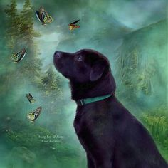 Young Lab With Buttys by Carol Cavalaris. Prints available at Fine Art America. Most times this pup is all paws and play and then there are those quiet moments when he stops to ponder curiosities that come his way.  Young Lab & Buttys prose by Carol Cavalaris  This painting of a young black Labrador Retriever watching some butterflies is from the Dogs and Cats collection of art by Carol Cavalaris.