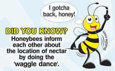 If youre headed out dancing this evening you might find it interesting that honey bees are also brilliant boogiers! When a worker bee returns to the hive it moves in a figure-of-eight and waggles its body to indicate the direction of the best food source. Honey Bee Facts, Bee Puns, How To Release Anger, Bee Quotes, Fun Facts For Kids, Buzz Bee, Bee Friendly, Animal Facts